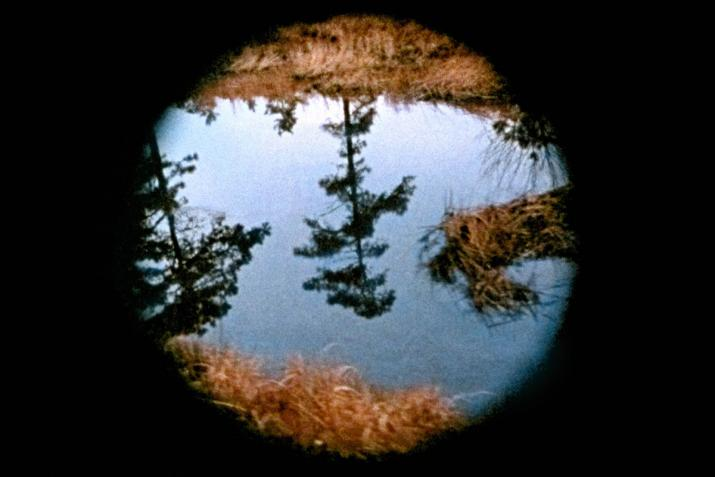 A still image from Nancy Holt's film Pine Barrens. A tree reflected in water seen through a circular cut out.