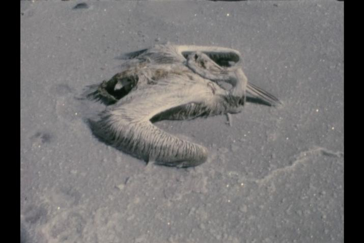 a dead pelican encrusted in salt crystals
