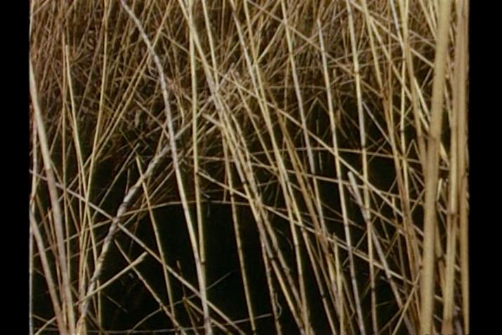 Chaotic image of many criss-crossing reeds with a dark background