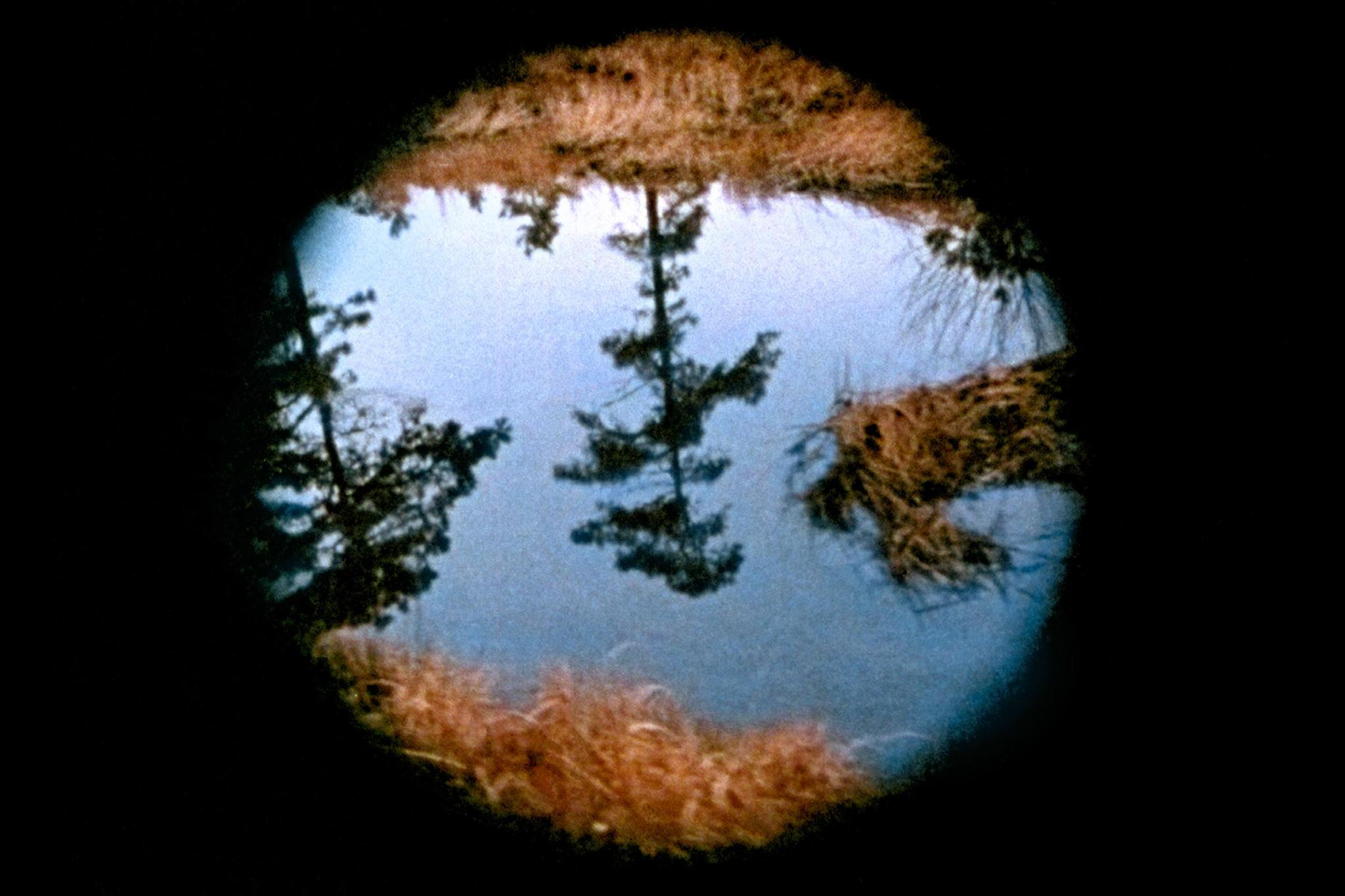 From Nancy Holt's film Pine Barrens. A view through a circular cut out showing a tree reflected upside down in water.