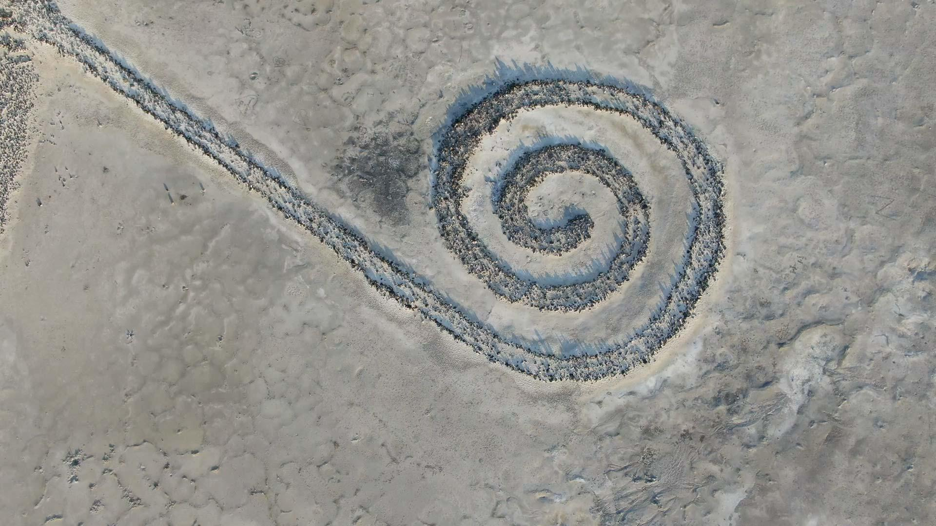 aerial view of spiral jetty
