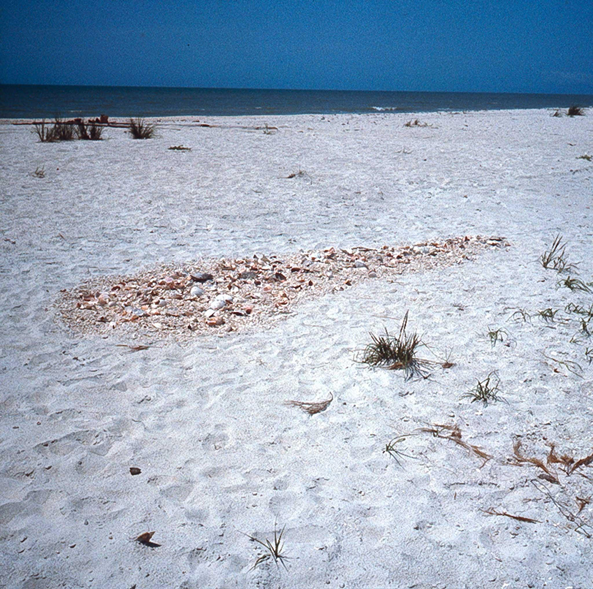 a white sand beach with a pile of sea shells arranged into a round shape.  blue sky and ocean in the background