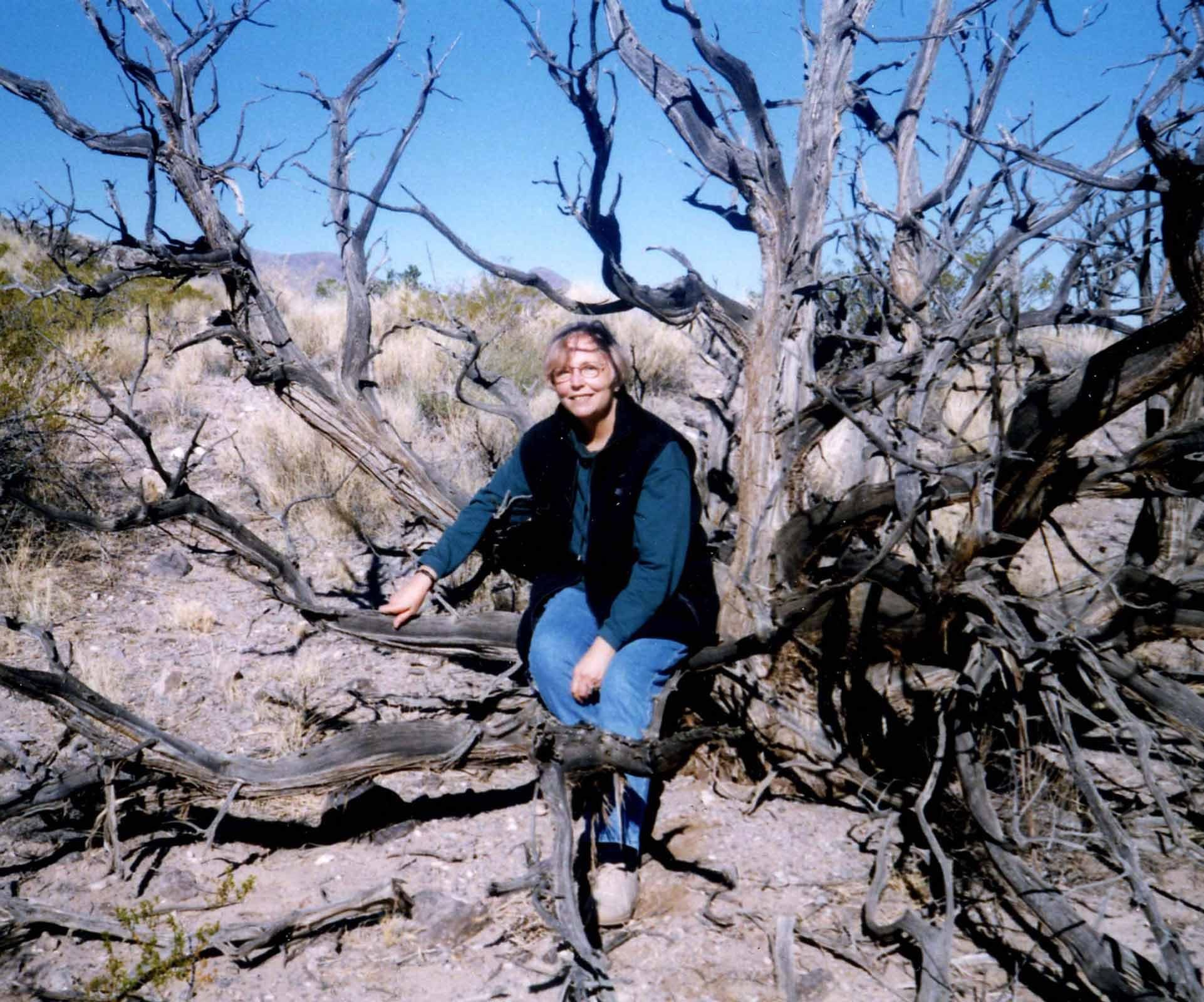Nancy Holt sitting in an old juniper tree in New Mexico